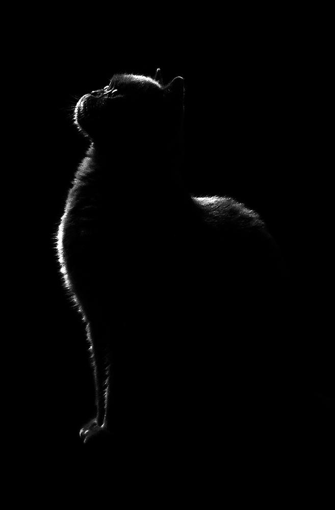 """фото """"Ночью все кошки серые"""" метки: природа, черно-белые, домашние животные"""