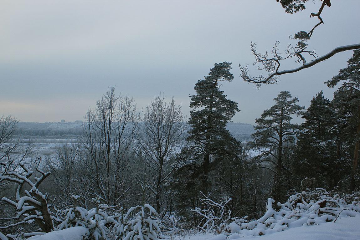 "фото ""В ДЕКАБРЕ"" метки: пейзаж, зима, лес"