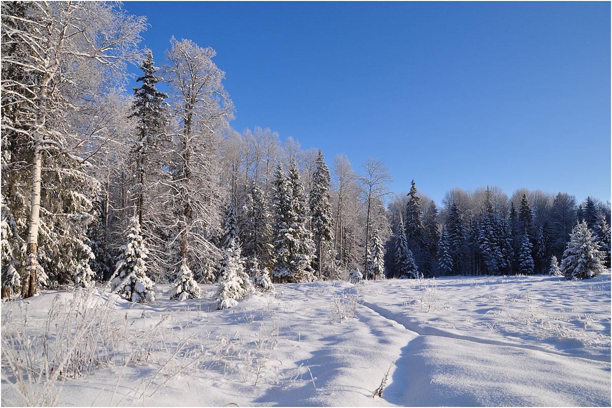 """фото """"Снежное покрывало"""" метки: пейзаж, зима, лес"""
