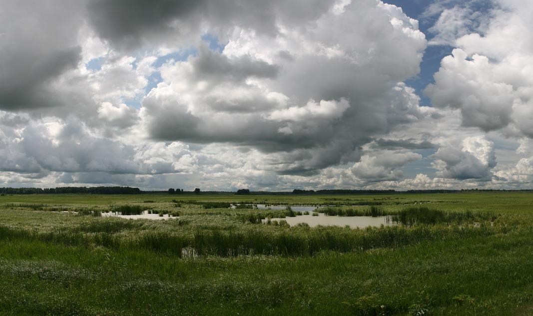 """фото """"Западно-Сибирская равнина - 1"""" метки: пейзаж, панорама, лето"""