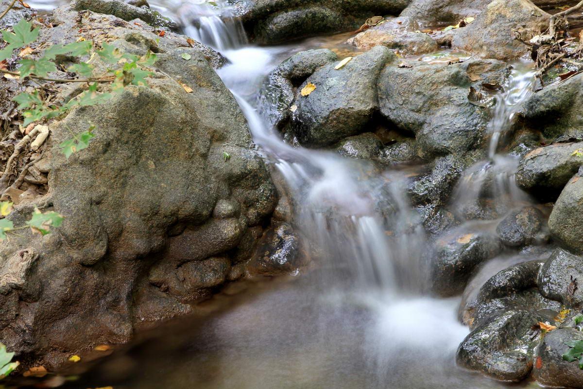 """фото """"Лесной ручей."""" метки: пейзаж, природа, лес"""