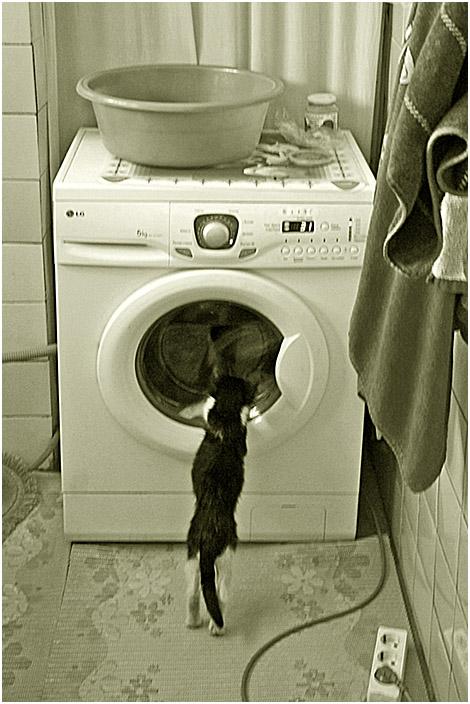"""фото """"Процесс под контролем."""" метки: , домашние животные кошки"""