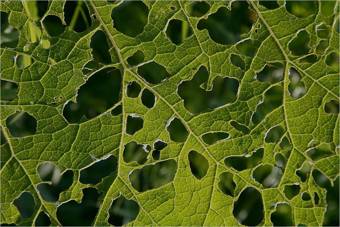 "фото ""Абстракция"" метки: абстракция, природа, цветы"