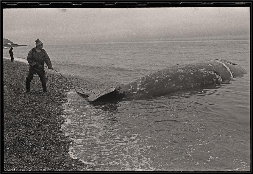 "фото ""Рыба-кит"" метки: жанр, черно-белые,"