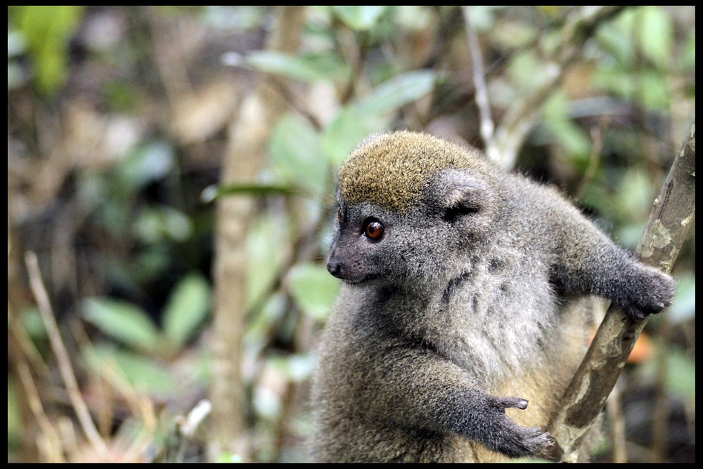 "photo ""***"" tags: travel, nature, Africa, wild animals"