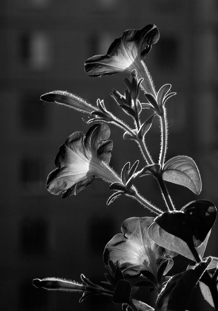 помощью дверных как называется фото в черно белом цвете строительства суден для