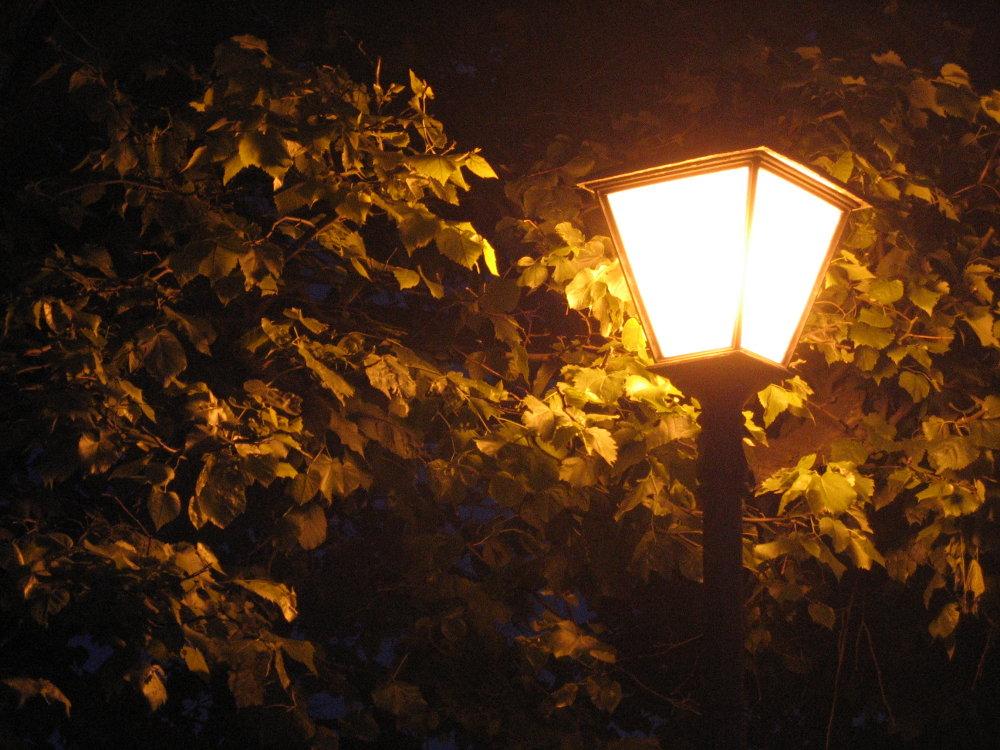 В свете фонарей картинки