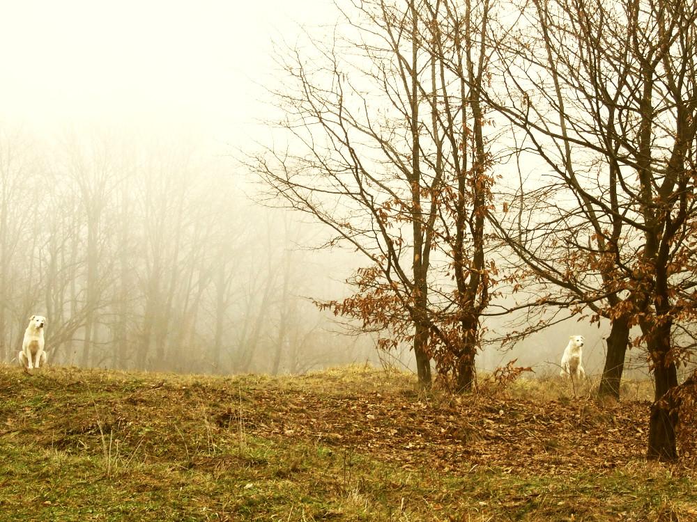 "photo ""autumn"" tags: landscape, nature, autumn"