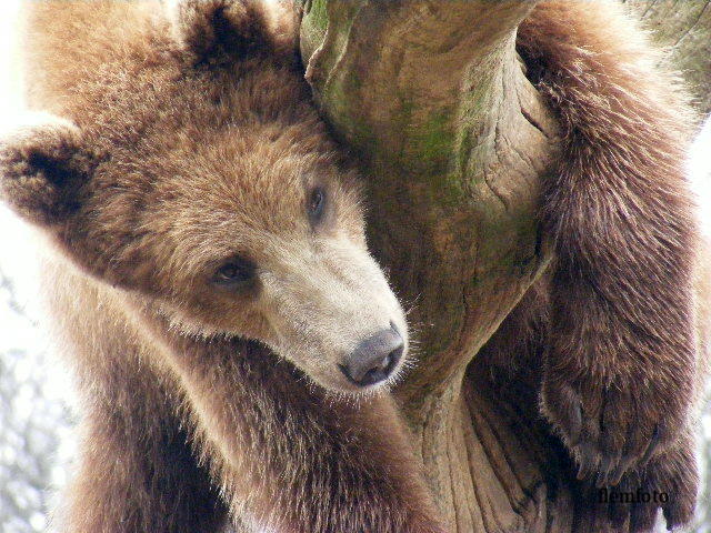 "photo ""Hi"" tags: nature, wild animals"