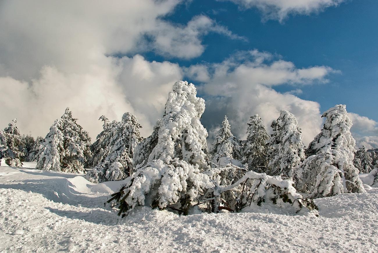 "фото ""Снежное безмолвие"" метки: пейзаж, зима"