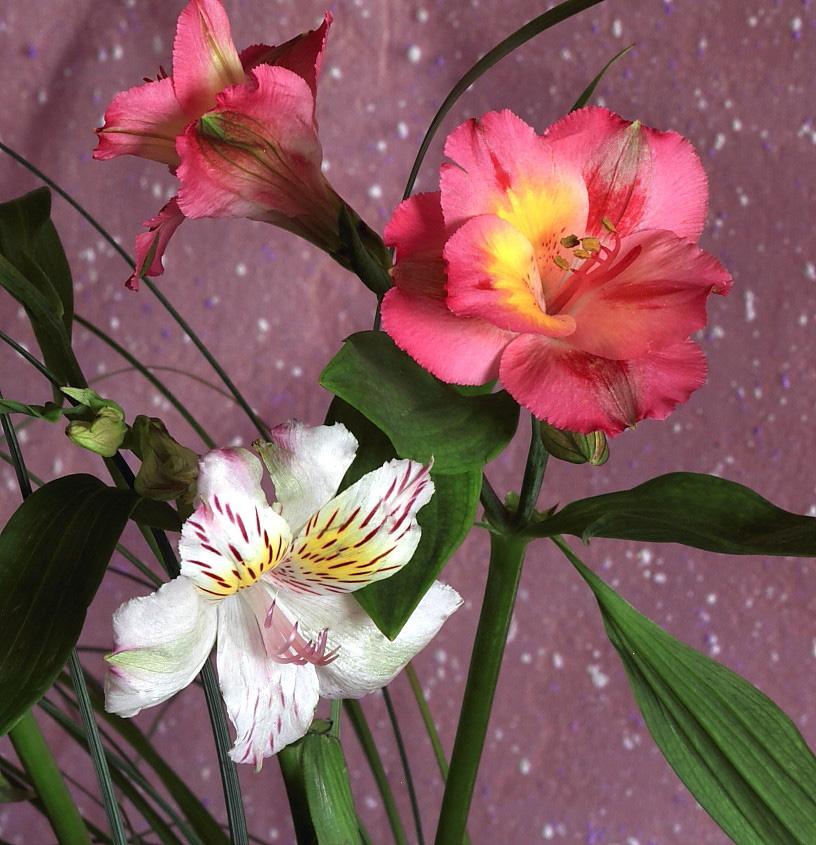 """фото """"Смущение...(вар2)"""" метки: природа, цветы"""