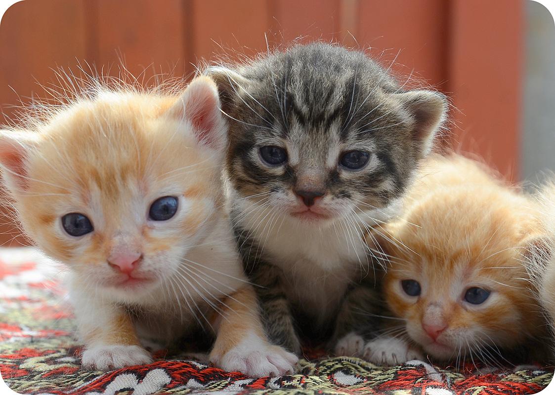 фото фотографии трех котят вкусные