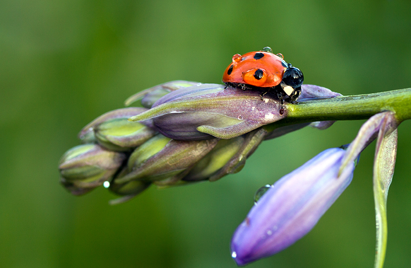 """photo """"***"""" tags: nature, flowers, insect"""