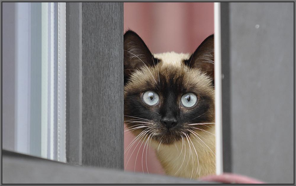 """фото """"Любопытство и страх"""" метки: природа, домашние животные"""