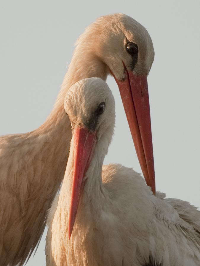 """фото """"Любовь!"""" метки: природа, дикие животные"""