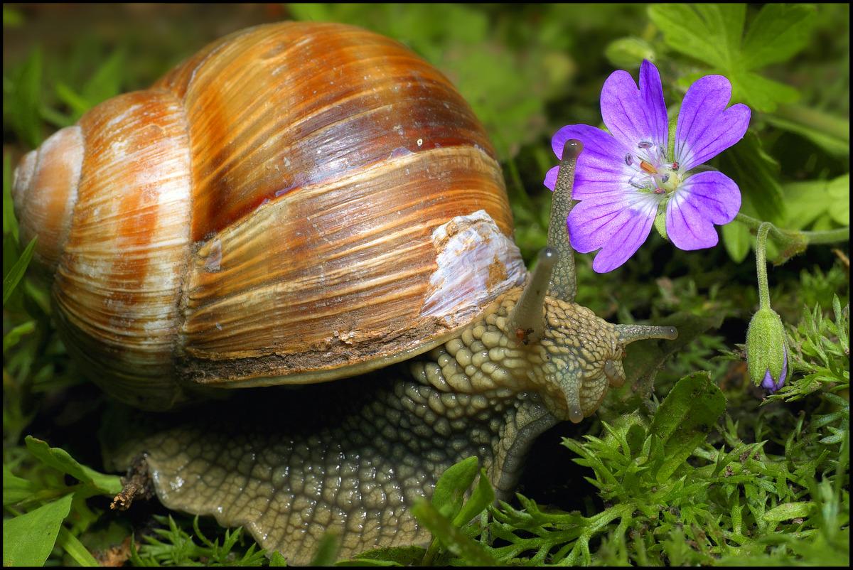 "photo ""***"" tags: macro and close-up, nature, wild animals"