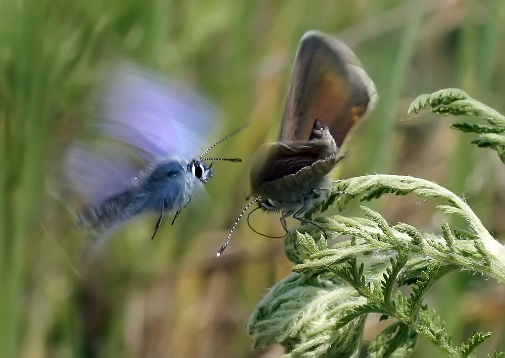 """фото """"Весенние шалости"""" метки: природа, насекомое"""