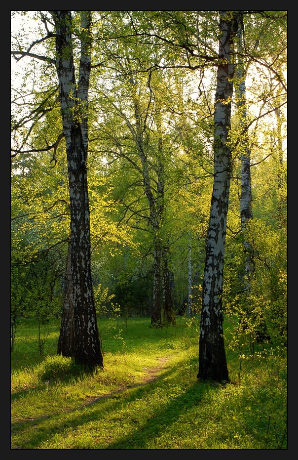 "photo ""Evening light"" tags: landscape, forest"