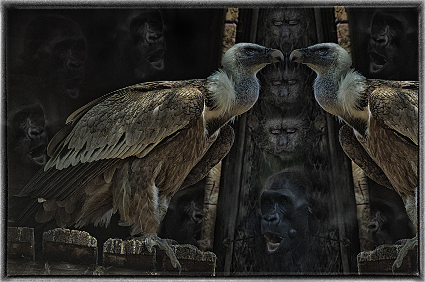 "photo ""Portal on a planet of Monkeys"" tags: abstract, digital art,"