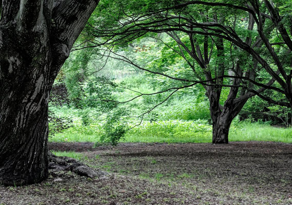 """фото """"В ботаническом саду"""" метки: пейзаж, лес"""