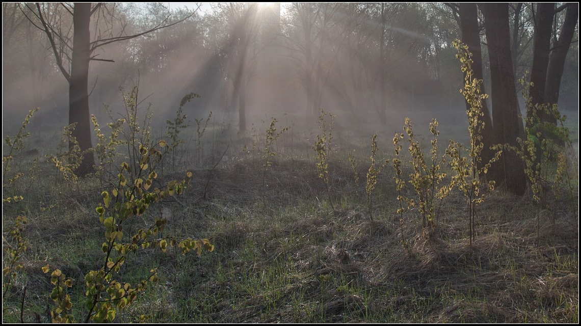 "photo ""sunny morning"" tags: landscape, forest, spring"