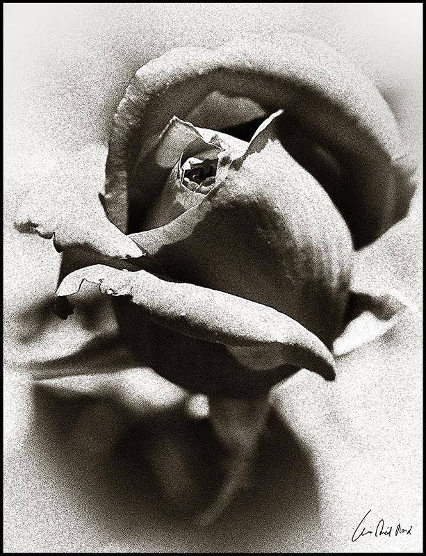 "photo ""***"" tags: black&white, digital art,"