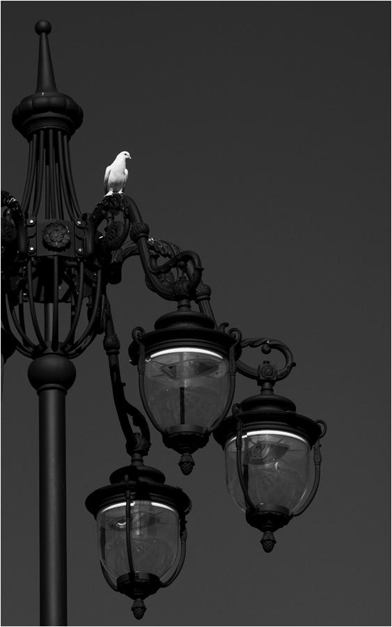 """фото """"Птица белая"""" метки: черно-белые,"""