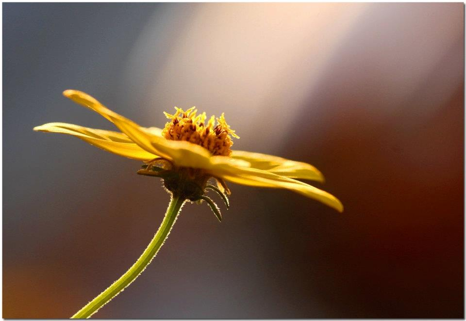 "photo ""Let There Be Light"" tags: nature, macro and close-up, flowers"