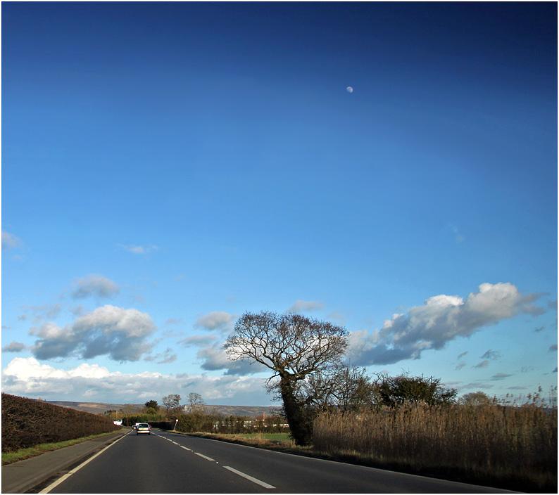 """фото """"Дорожная с луной."""" метки: пейзаж, дерева, дерево, облака, путевыезаметки"""