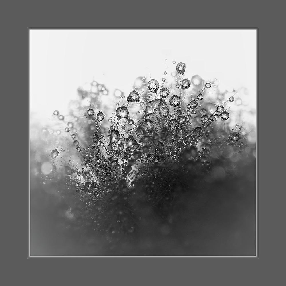 """фото """"Капли...."""" метки: макро и крупный план, природа, цветы"""