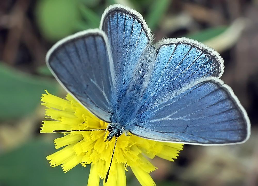 """фото """"Во всей красе"""" метки: макро и крупный план, природа, насекомое"""