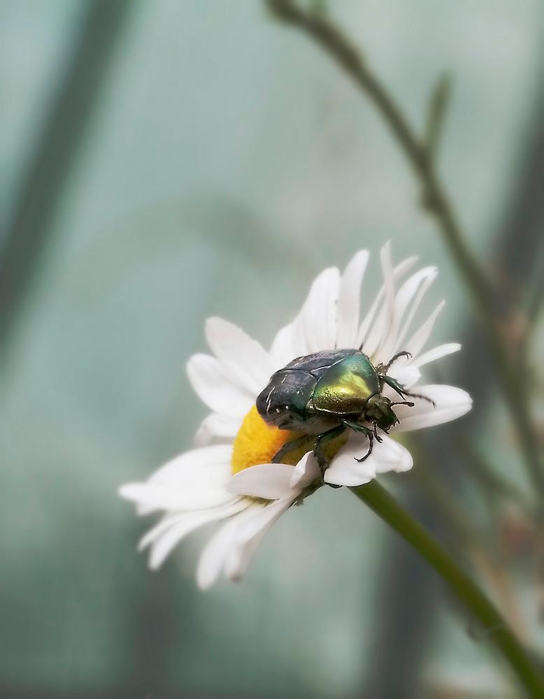 "фото ""Ж"" метки: природа, насекомое"