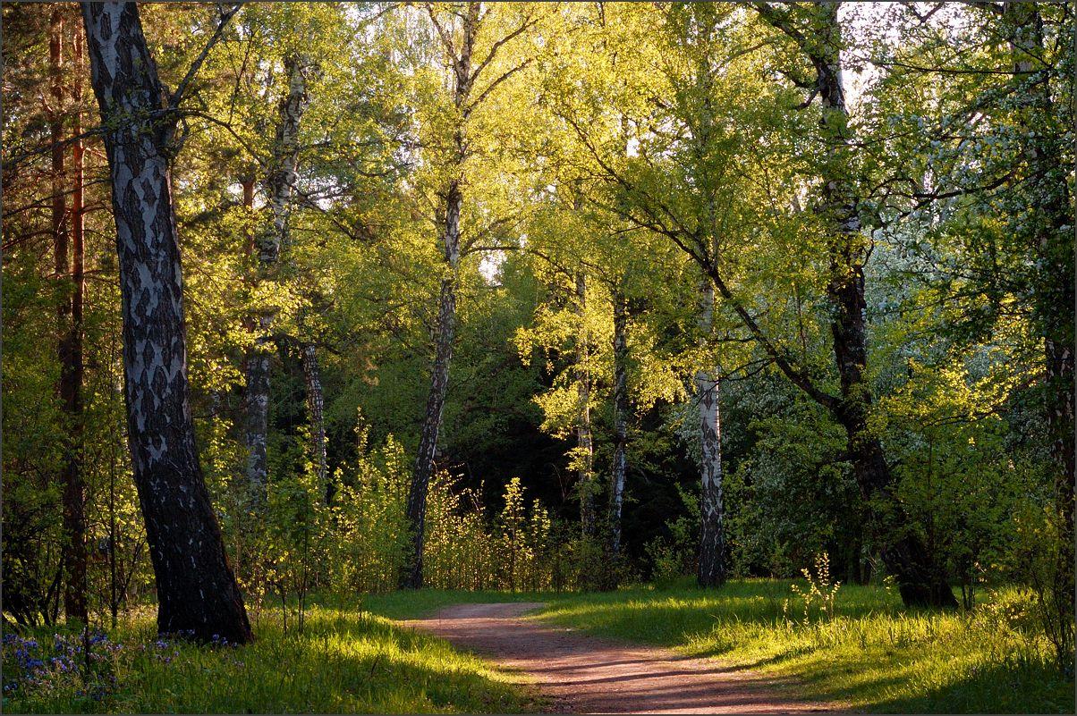 """фото """"В лучах золотого света"""" метки: пейзаж, лес, лето"""