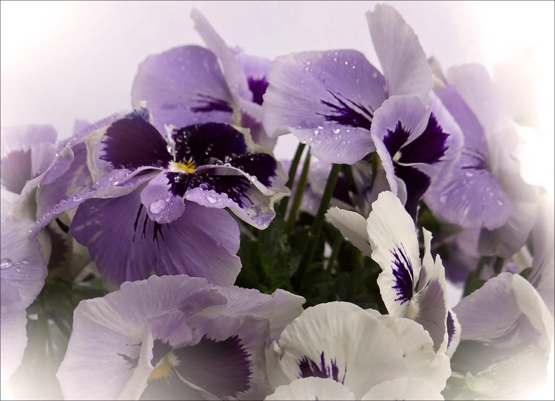 """фото """"Одно прекрасное утро..."""" метки: природа, цветы"""