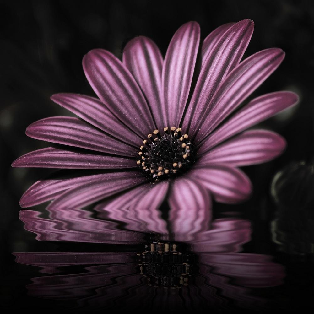 "photo ""réflexion"" tags: nature, still life, flowers"