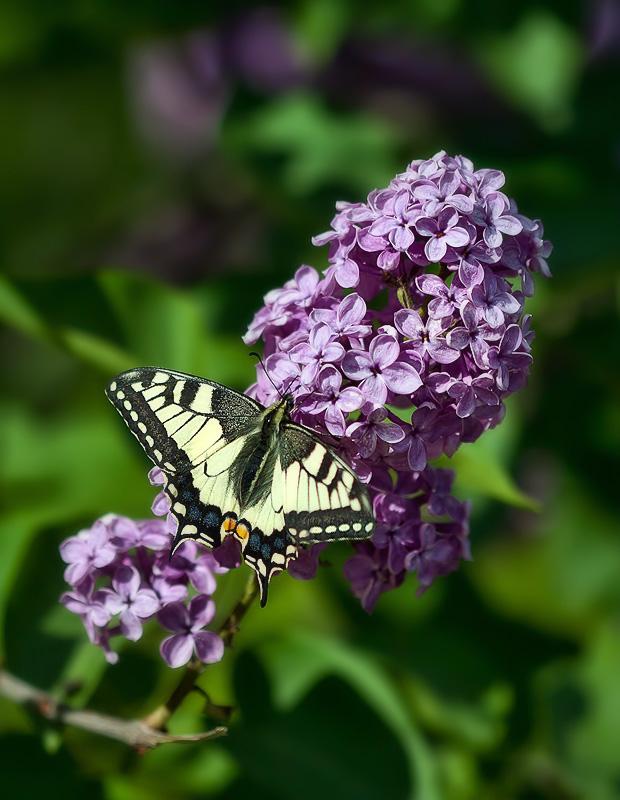 """фото """"*"""" метки: природа, насекомое, цветы"""