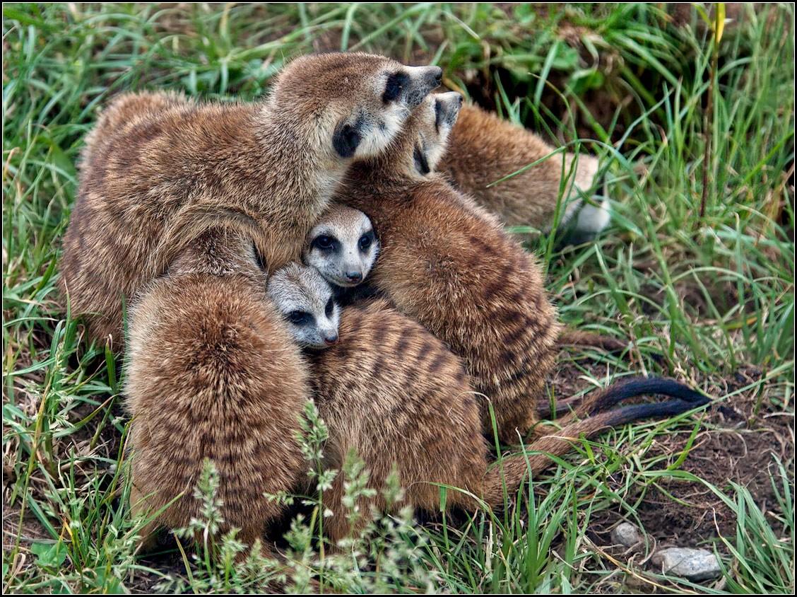 "photo ""united family"" tags: nature, wild animals"