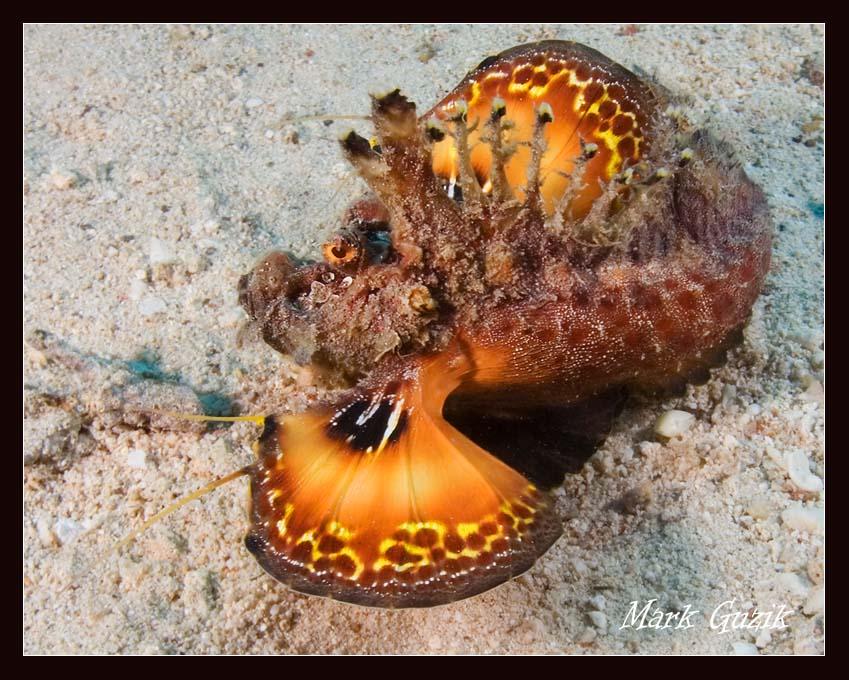 "photo ""Вragon"" tags: underwater,"