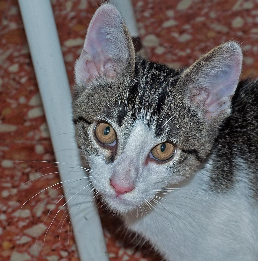 "photo ""Martha"" tags: nature, macro and close-up, pets/farm animals"