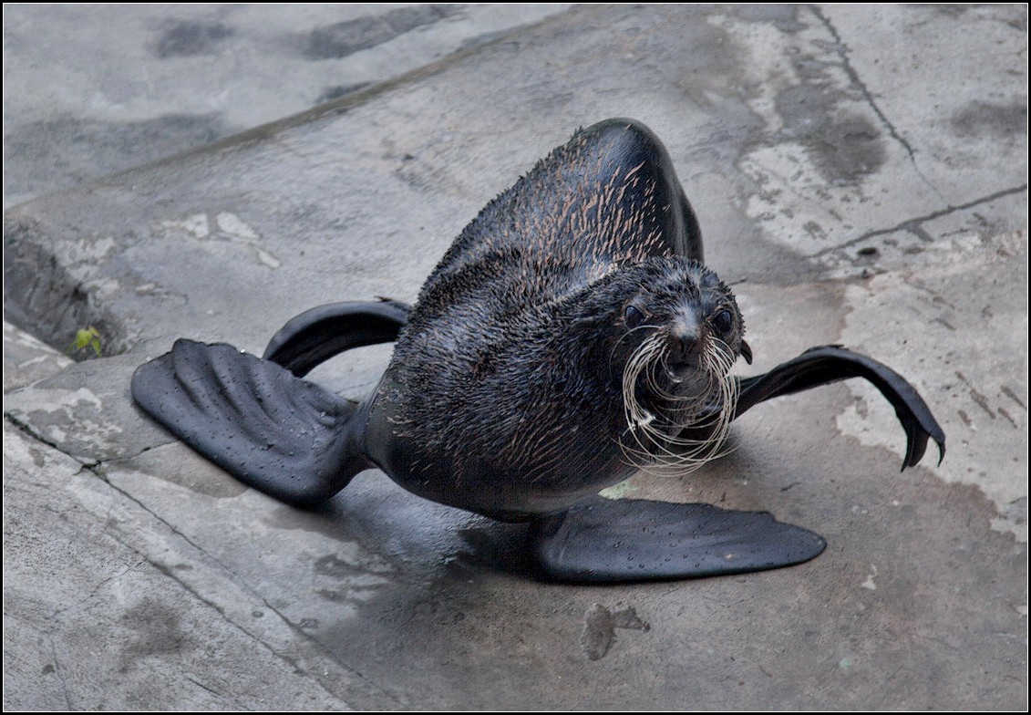 "photo ""break-dance))"" tags: nature, genre, wild animals"