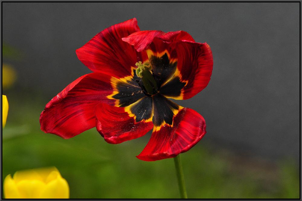 """фото """"Последний танец"""" метки: природа, цветы"""