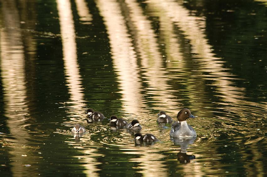 "photo ""Black and white world"" tags: nature, wild animals"