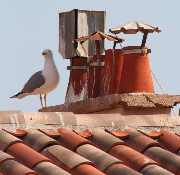 "photo ""on the roof"" tags: nature, pets/farm animals"