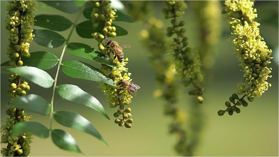 """фото """"Летним солнечным утром..."""" метки: природа, насекомое"""