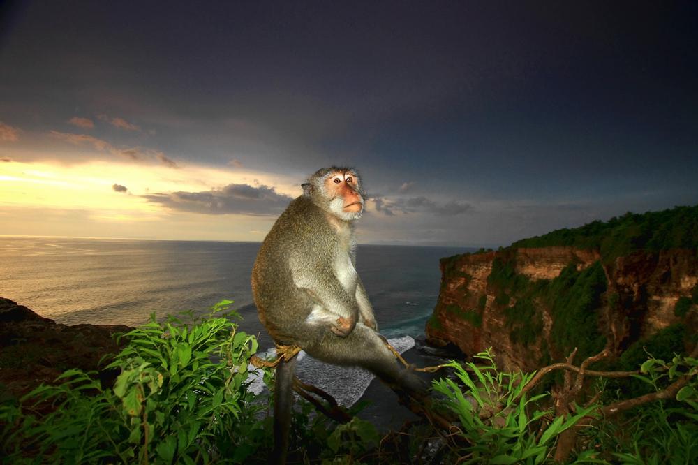 "photo ""***"" tags: nature, travel, Asia, wild animals"