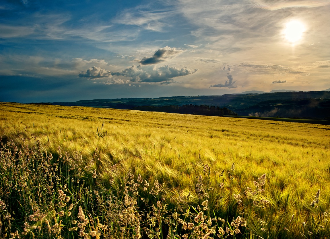 "photo ""ХЛЕБ"" tags: landscape, sunset"