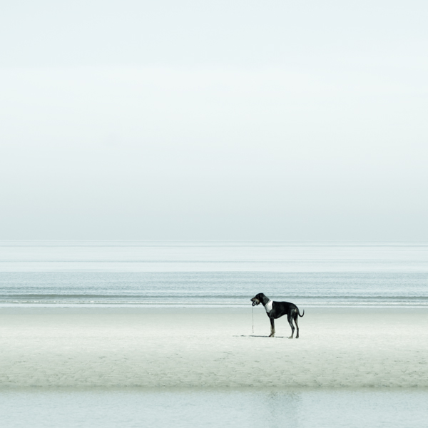"photo ""the sea III"" tags: nature, landscape, pets/farm animals, water"