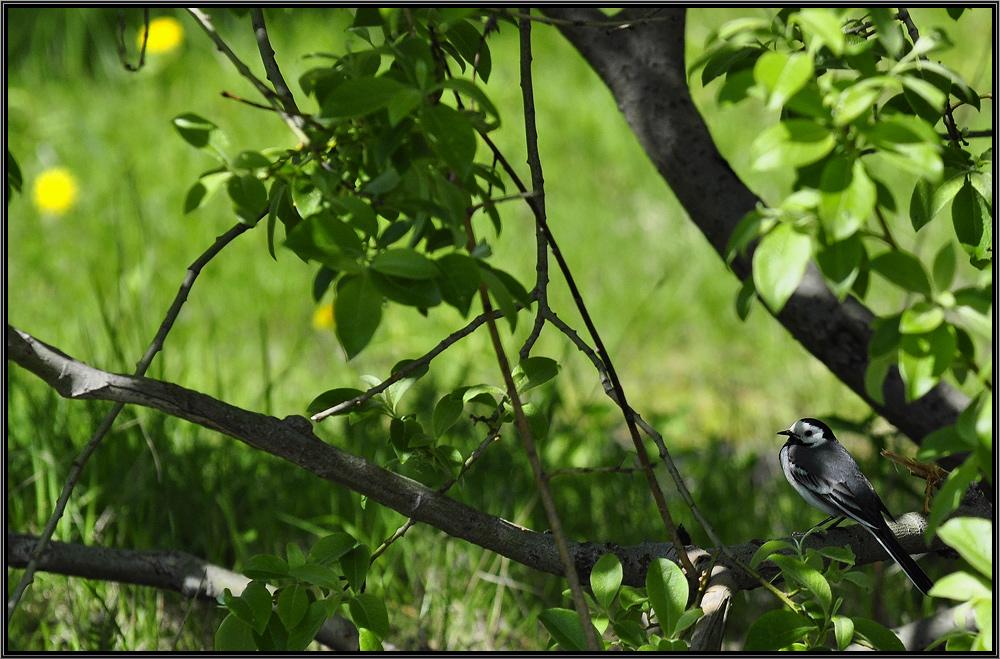 """фото """"тенёк"""" метки: природа, дикие животные"""