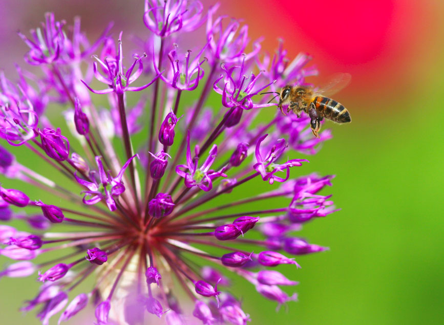 """фото """"летящая за нектаром"""" метки: природа, насекомое"""