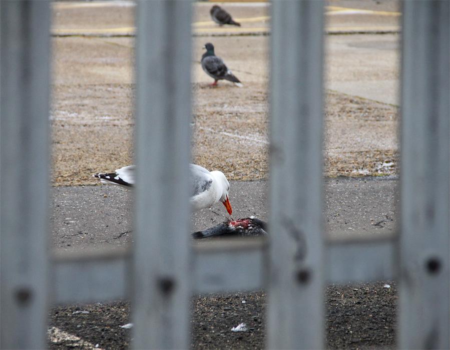"""фото """"Такая горькая правда жизни."""" метки: природа, дикие животные, птицы"""